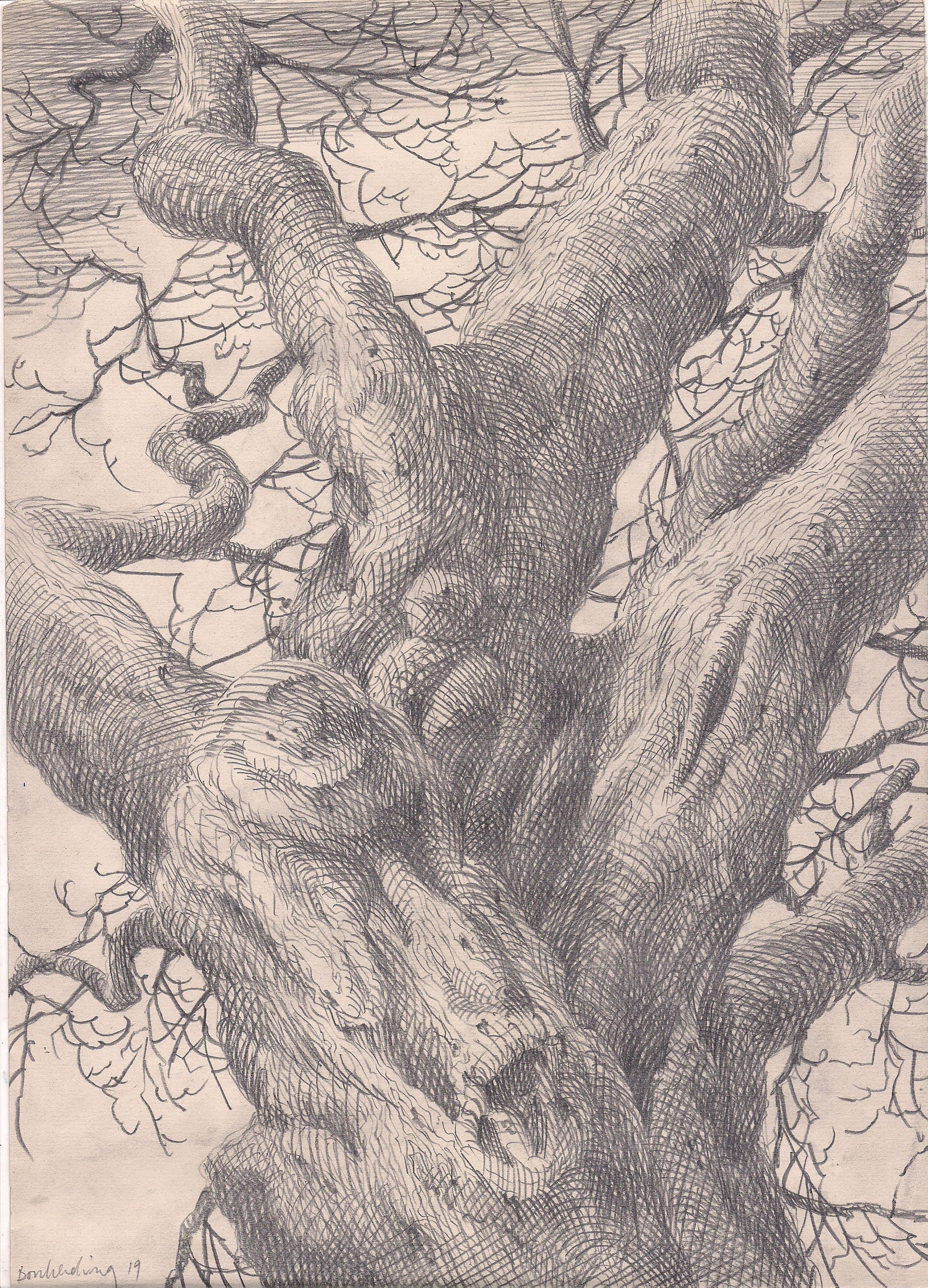 ohne Titel (Baum)