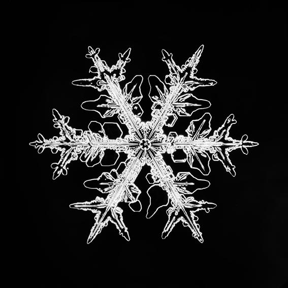 Schneesternchen_019